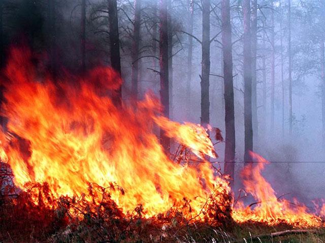 НаЮжном Урале потушили шесть лесных пожаров наплощади 28,4 гектара