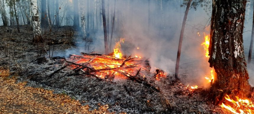 В Кыштыме из-за высокой пожароопасности горят леса