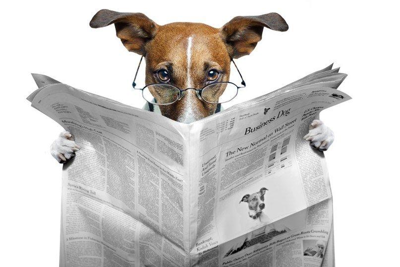 ПЯТЬ причин купить свежий номер газеты «Кыштымский рабочий» от 20 ноября: