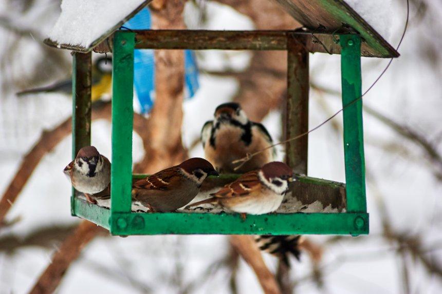 В Кыштыме дошкольники стали настоящими друзьями птиц
