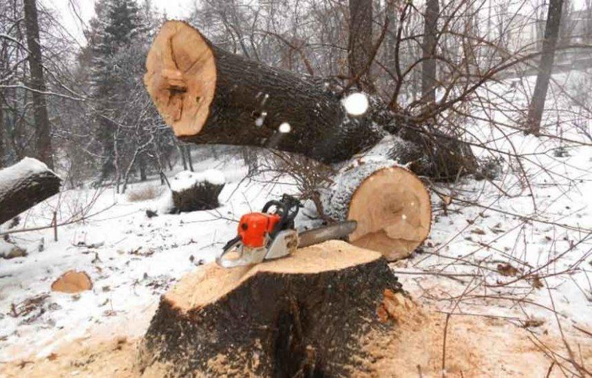 Жителя одного из кыштымских посёлков придавило деревом во время заготовки дров
