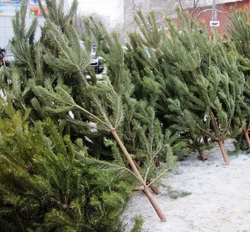 Жителя Кыштыма оштрафовали за продажу деревьев в неподходящем для этого месте