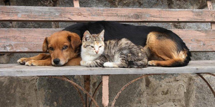 В Кыштыме фонд помощи бездомным животным прекращает свою деятельность