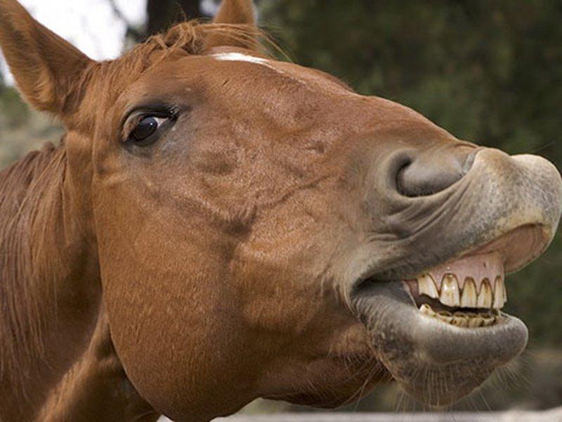 В Кыштыме лошадь укусила годовалого малыша