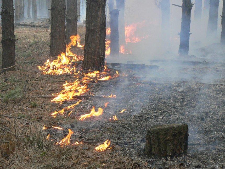 В Кыштымском округе лесные пожары «прошлись» по площади около 50 гектаров
